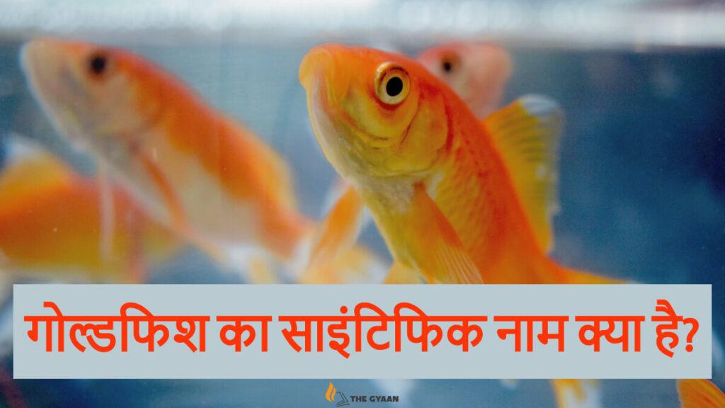 Gold fish ka scientific naam kyaa hai